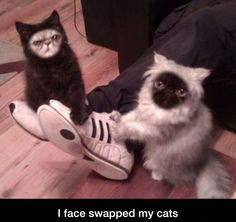 Face Swapped My Cats