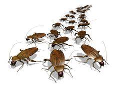 #Pest #control  #Bangalore http://www.gapoon.com/pest-control-services-bangalore http://www.gapoon.com