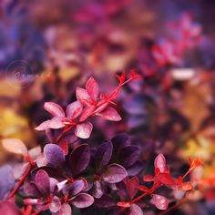 Colorful ,Photos ,of ,Autumn,fall, beautiful, stunning,autumn decor, photos, colors, wedding ideas, decorations, coloring, facts, beautiful, mother nature, movie, poems, scenes, purple, sayings, leaves, leaf, wallpaper,