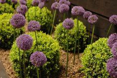 How to create a contemporary garden. Image ©Earth Designs