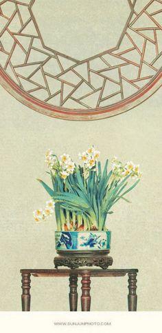 送你一盆水仙花