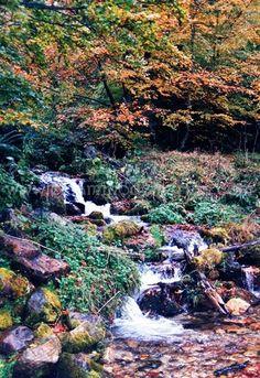 Senderos del agua en #Asturias. Rutas de  #senderismo La Cascada del Mongallu Parque Natural de Redes