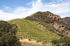 Malibu Family Wines and Safari: Feed Yaks & Zebras at a Malibu Winery - California Through My Lens Malibu California, California Vacation, Travel Goals, Travel Tips, Malibu Wines, Wine Safari, Agoura Hills, Outdoor Seating Areas, Wine Making