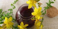 John's wort oleju: właściwości, zastosowania, skutki uboczne i jak przygotować it-greenMe