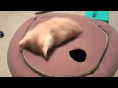 It's nonstop kittens in today's Sunday Catinee! Literally. No camera tricks involved: http://www.sparklecat.com/weird-cat-videos/sunday-catinee-the-kitten-wormhole