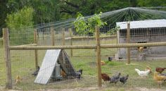A Raptor Resistant Overhead for a Hen Yard. Light electric fence wire (not charged) spaced about every twelve to fourteen inches where it ties into the fence, wrapped once around the center pole then off to the other side of the yard.