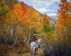 Ride a horse and enjoy the colors at McGee Creek Pack Station in Mono County.