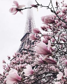 Blooming explosion 🌸 We can promote your photos in our account. Check the link in our bio for instructions: Eiffel Tower, Paris, France. Photo by 💖 Good Deeds Good. Paris Wallpaper, Nature Wallpaper, Trendy Wallpaper, Paris Photography, Nature Photography, Roses Tumblr, Real Nature, Pink Nature, Beautiful Paris