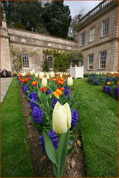 Flowers at Dyrham House, Gloucestershire, England