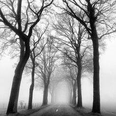 Trees in Dutch landscape - Drenthe ©alberthartwig