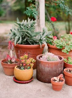 Our potted succulents come from cuttings from friends' yards, neighborhood walks, our local neighborhood garden exchange, and local nurseries.
