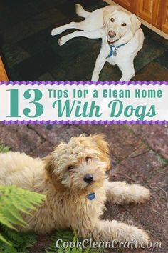 Dogs are bundles of fluff that bring joy and energy to your home. But that's not all they bring. They also leave a trail of disaster – fur, toileting accidents, destroyed toys, and sand and leaves from the garden. How do you keep a house clean when you have dogs? Here are my best tips and tricks.