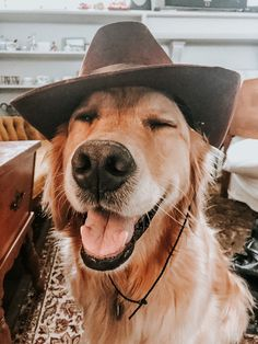 Cute Animal Photos, Cute Pictures, Music Cover Photos, Music Covers, Album Covers, Cowboy Photography, Fluffy Cows, Rodeo Life, Cute Dogs And Puppies