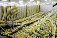 Maggio 2012: il Parmigiano dopo il terremoto a San Giovanni Persiceto (ph Philippe Maeder)