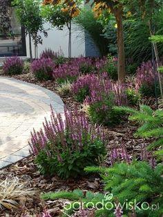 Mailbox Landscaping, Privacy Landscaping, Outdoor Landscaping, Landscape Architecture, Landscape Design, Garden Design, Small Front Gardens, Back Gardens, Terrace Garden