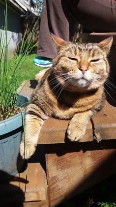 Pachewy Cat | Pawshake