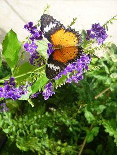 Aruba Butterfly Museum by aneta.hall, via Flickr