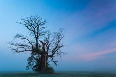 The Oak on Behance