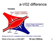 a-vo2 difference exercise - Google Search