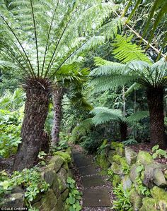 how to make dinosaur fern soil