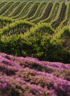Napa Valley, CA I lived just down the road from here and used to go to all the little farmers markets here! Loved it!