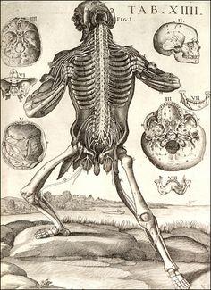 Pierre de Cortone, table anatomique, LIbrairie de médecine