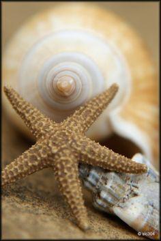 pentydeval:  Memories (Explore) (par Medicinemansam)