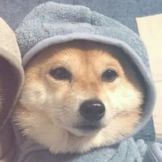 Dog Match, Dog Icon, Cute Love Memes, Pet Dogs, Pets, Anime Best Friends, Matching Profile Pictures, Dolly Parton, Shiba Inu