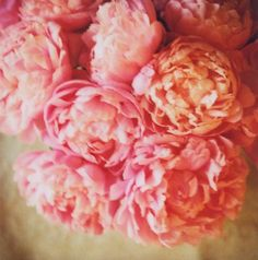 pink & peach peonies. this would be incredible header inspiration in watercolor