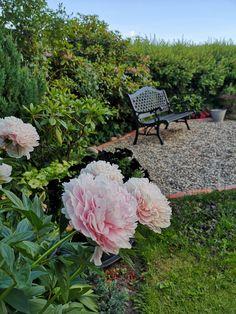 Outdoor Furniture, Outdoor Decor, Plants, Home Decor, Decoration Home, Room Decor, Plant, Home Interior Design, Backyard Furniture