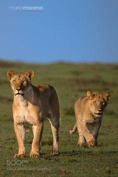 Stalking by mariomoreno #animals #animal #pet #pets #animales #animallovers #photooftheday #amazing #picoftheday