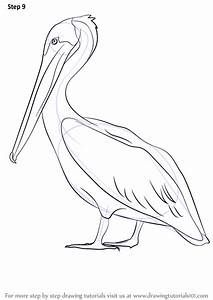 Learn How to Draw a Brown Pelican (Sea Water Animals) Step by Step : Drawing Tutorials Pelican Drawing, Pelican Tattoo, Pelican Art, Bird Drawings, Animal Drawings, Watercolor Pictures, Watercolor Paintings, Louisiana Art, Wings Drawing