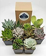 How To Water Succulents In Winter Succulents How To Water