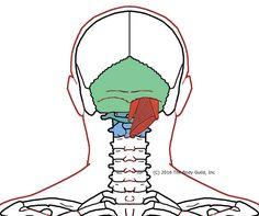 HOI - sub-occipitals (1)
