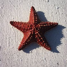 Only in the #Bahamas ! #starfish