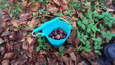 Tag spanden med i skoven! Scrunchbucket er god til at samle kastanjer og andre ting i.