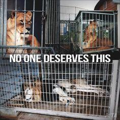 SUCCESS: Catalonia government have voted to ban wild animals in circuses http://www.animanaturalis.org/n/44257/historico_cataluna_prohibe_el_uso_de_animales_salvajes_en_circos…
