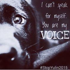 #StopYulin2015 - Google+
