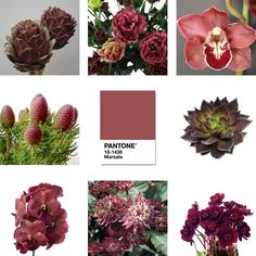 Marsala 2015 Pantone Color of the Year. Marsala Floral Design Flower ideas for 2015. #FinishWithFlowers