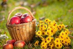 Basket with red apples and flowers in autumn outdoors  Healthy eating concept