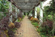 The trellis at Daniel Stowe Botanical Garden in Belmont, NC.  It's a really beautiful place.