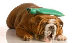 Qué hacer si tu mascota sufre un golpe de calor
