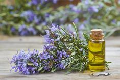 Herbal Oil: Rosemary Oil Benefits and Uses Natural Home Remedies, Herbal Remedies, Lice Remedies, Flea Remedies, Rosemary Oil For Hair, Rosemary Plant, Essential Oils For Hair, Diy Shampoo, Juicing For Health