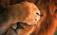 Bildresultat för lejon