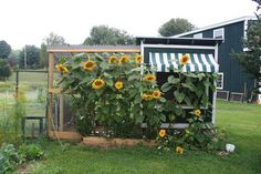 Great idea to put planting boxes all around the coop to discourage predators. Also LOTS of ventilation.