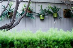 How To: Turn Your House Into a Staghorn Fern Party Air Plants, Indoor Plants, Staghorn Plant, Farm Gardens, Garden Farm, Platycerium, Epiphyte, Garden Trees, Tropical Garden
