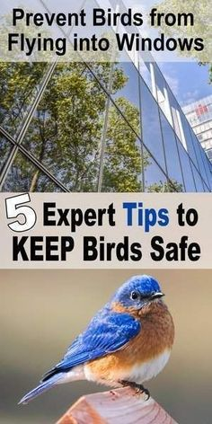 How to stop birds from flying into windows. Why birds hit windows and ways to prevent bird strikes using decals, stickers, wind chimes . Backyard Projects, Cool Diy Projects, Birds Flying Into Windows, Bird Feeder Plans, Bird Feeders, Keep Birds Away, Why Do Birds, Bird Strike, Nocturnal Birds