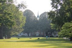 Dogs on the Quad | by Jane Inman Stormer