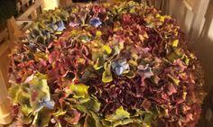 #Hydrangea #Hortensia #Autumn Mix;  Available at www.barendsen.nl