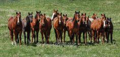 Teenage Boys Bear Paws, Equine Photography, Horses, Boys, Animals, Baby Boys, Animales, Animaux, Horse Photography